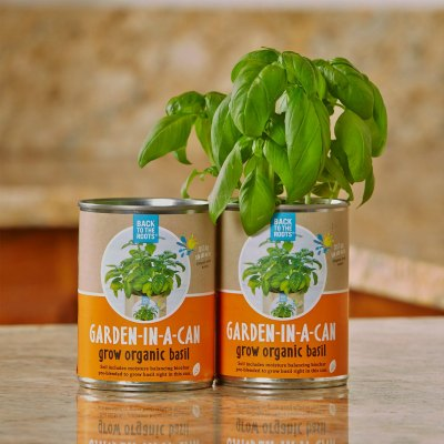 Grow Organic Basil In A Can